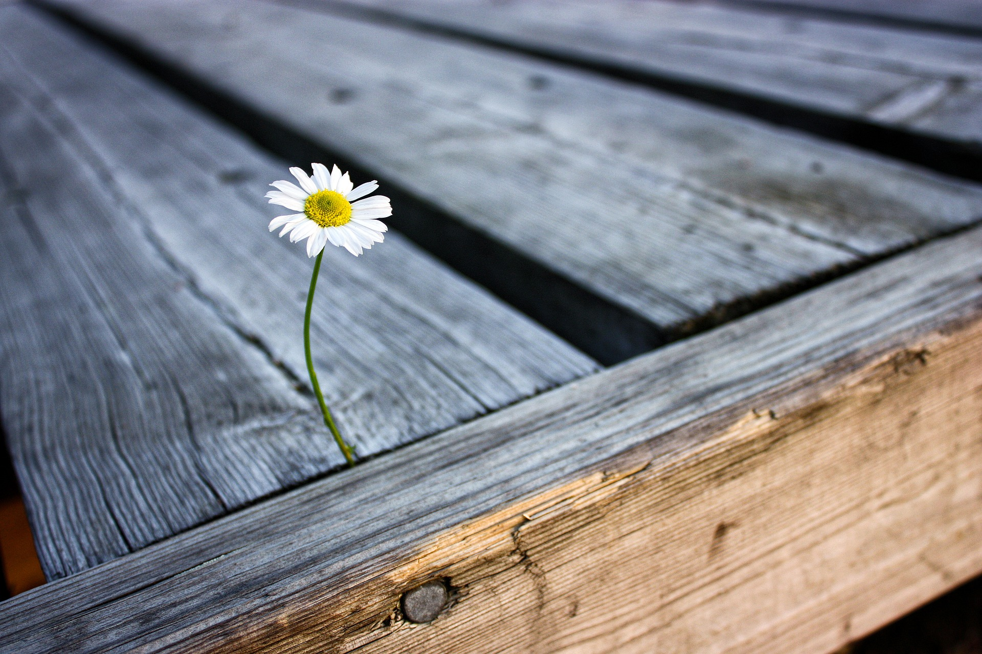 picture of a flower growing between two boards