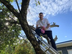 Mustafa omenapuussa